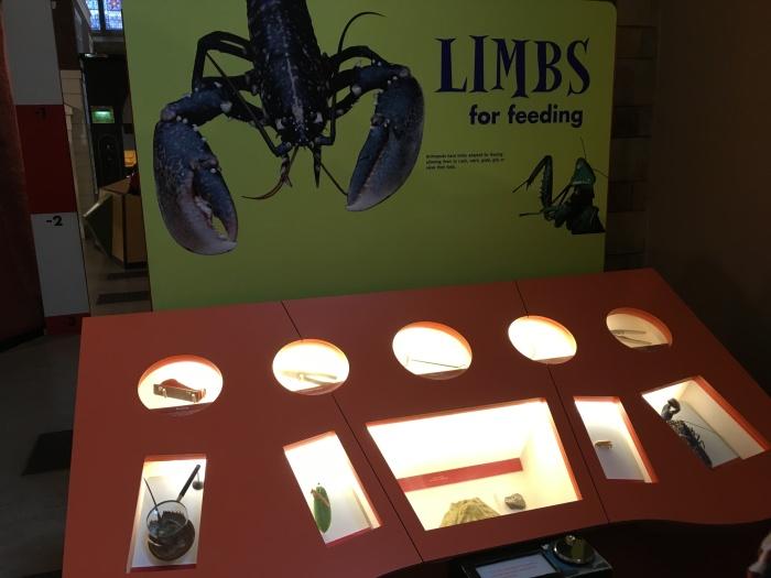 อันนี้ห้อง Arthropod มีทุกเรื่องเกี่ยวกับแมลงแมงและผองเพื่อน